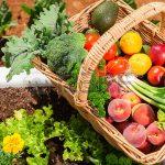 aliments anticancer en naturopathie